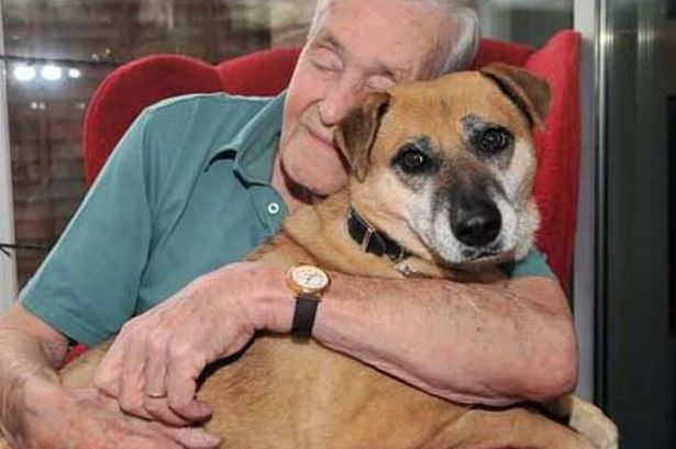albert-yarnall-aged-85-from-yardley-wood-has-given-a-dog-tilly-a-good-home-383834000