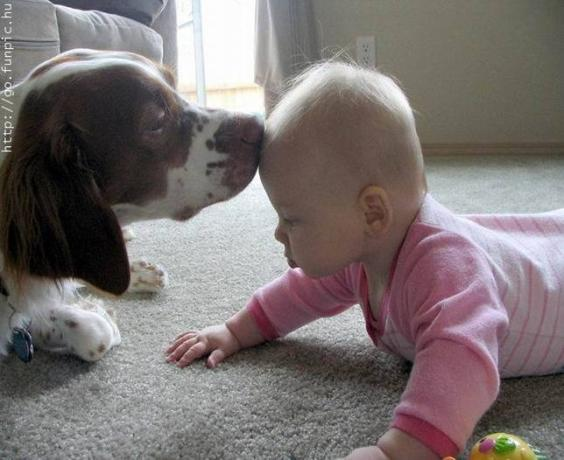 dog-kissing-a-baby-wallpaper