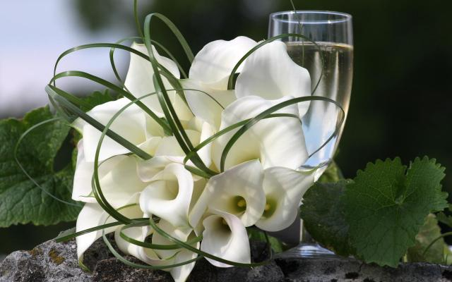 beautiful_white_lilies-1920x1200