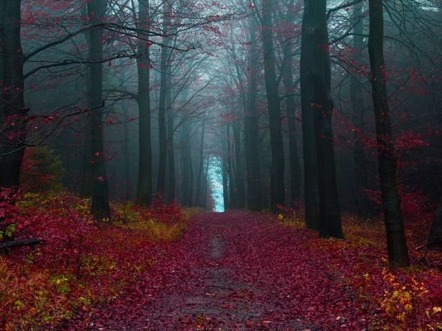 03-autumn-woods-germany-photograph-by-jonathan-manshack